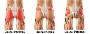 daniele macri personal trainer roma anatomia gluteo