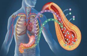 ormoni nel controllo del peso